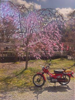 春木の春日神社で.jpg
