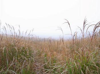 曽爾高原2.jpg